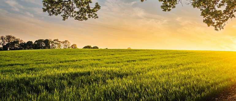 Можно ли получить налоговый вычет за покупку земли